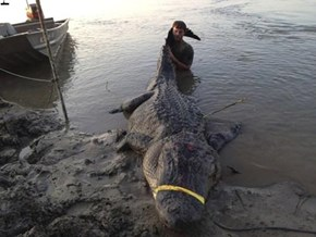 Record 741 lb Gator Caught