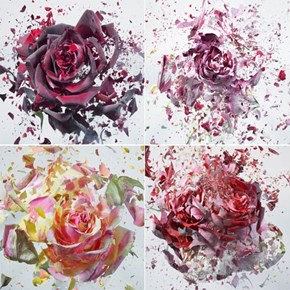 A New Perspective of the Day: Shattering Flowers