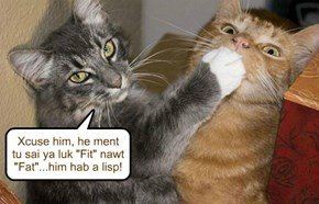 Is dere speech therpie abailable fer kittehs?
