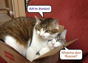 How bout thinkin outside teh box Roscoe!