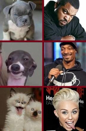 Celebrity Pets!