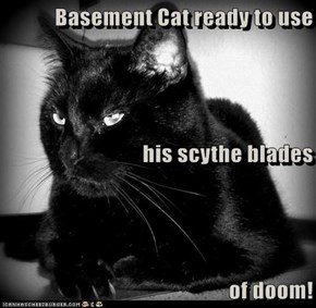 Basement Cat ready to use his scythe blades of doom!