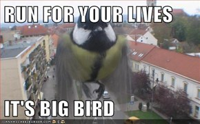 RUN FOR YOUR LIVES  IT'S BIG BIRD