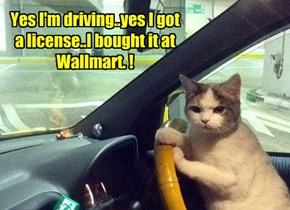 Yes I'm driving..yes I got a license..I bought it at Wallmart. !