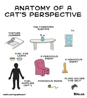 A Cats Perspective