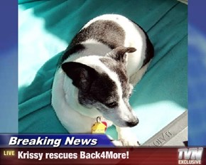 Breaking News - Krissy rescues Back4More!