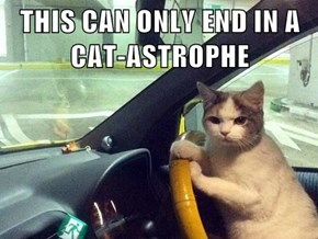 THIS CAN ONLY END IN A CAT-ASTROPHE