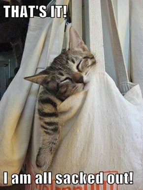 Cat Too Sleepy to be Let Out of the Bag
