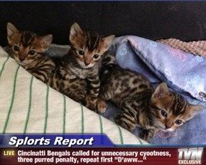 "Splorts Report - Cincinatti Bengals called for unnecessary cyootness, three purred penalty, repeat first ""D'aww..."""