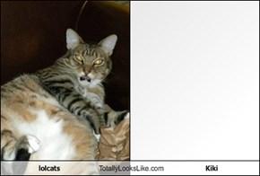 lolcats Totally Looks Like Kiki