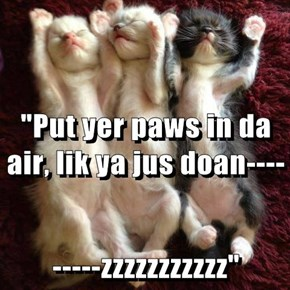 """Put yer paws in da air, lik ya jus doan---- -----zzzzzzzzzzz"""