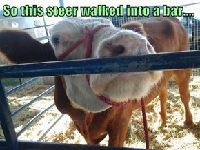 So this steer walked into a bar....