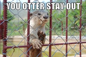 YOU OTTER STAY OUT