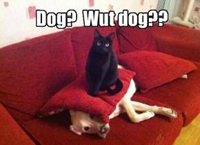 Dog?  Wut dog??