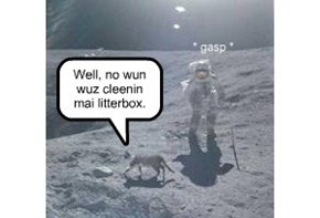 Why there are kittehs on the moon