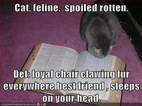 Cat, feline.  spoiled rotten.  Def: loyal chair clawing fur everywhere best friend , sleeps on your head.