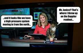 Take Your Cat to Work Day Was, In Hindsight, a Rather Bad Idea