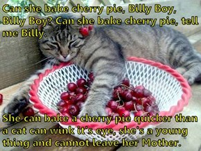 Can she bake cherry pie, Billy Boy, Billy Boy? Can she bake cherry pie, tell me Billy.   She can bake a cherry pie quicker than a cat can wink it's eye, she's a young thing and cannot leave her Mother.