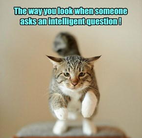 The way you look when someone asks an intelligent question !