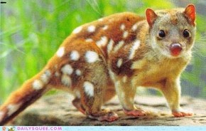 Endangered Spotted Possum