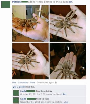 Lizards, arachnids... same thing.