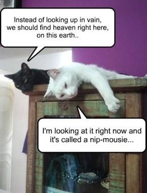 Basement Cat goes Deep...