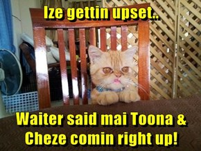 Ize gettin upset..  Waiter said mai Toona & Cheze comin right up!