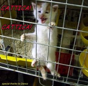 CATTICA! CATTICA!