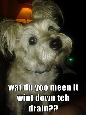 wat du yoo meen it wint down teh drain??