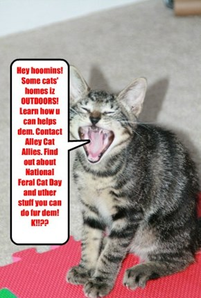 Hey hoomins! Some cats' homes iz OUTDOORS! Learn how u can helps dem. Contact Alley Cat Allies. Find out about National Feral Cat Day and uther stuff you can do fur dem! K!!??