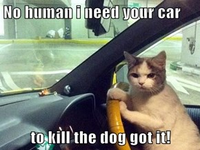 No human i need your car  to kill the dog got it!