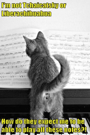 I'm not Tchaicatsky or Liberachihuahua  How do they expect me to be able to play all these notes?!