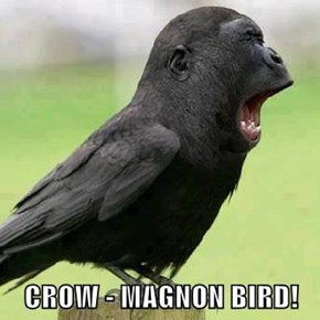 CROW - MAGNON BIRD!