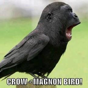 CROW - MAGNON BIRD!