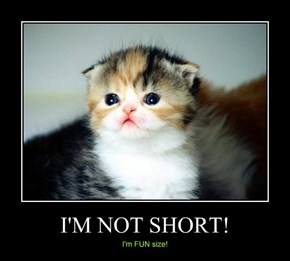 Fun Size Kitteh