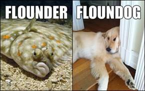He Ain't Nothin' but a Floundog