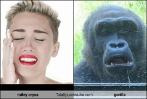 miley cryus Totally Looks Like gorilla