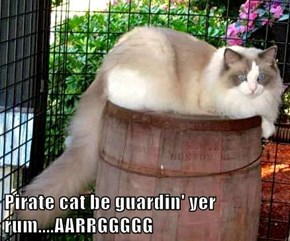 Pirate cat be guardin' yer rum....AARRGGGGG