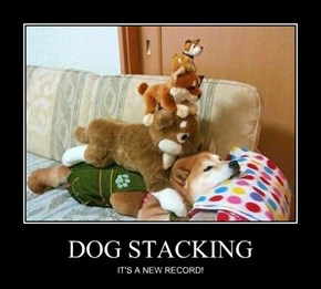 DOG STACKING