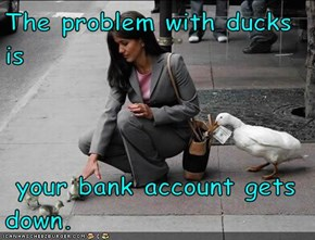 The problem with ducks is   your bank account gets down.