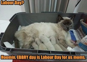 Labour Day?           Hoomin, EBBRY day is Labour Day for us moms.