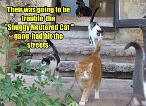 "Their was going to be trouble  the  ""Snuggy Neutered Cat "" gang  had hit the streets."