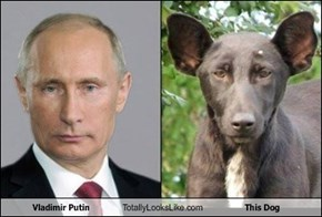 Vladimir Putin Totally Looks Like This Dog