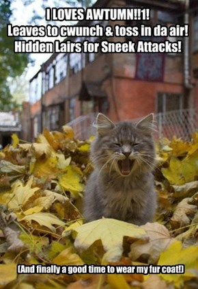 Hooray! Autumn is Falling!