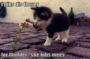 I piks dis flower  for Mudder...she lubs mees