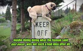 maybe doing doing what the human said - just once! was not such a bad idea after all.