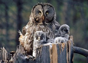 Baby Owls' First Look at the World