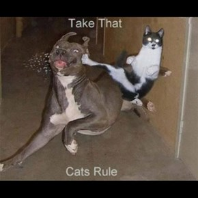 Cats FTW