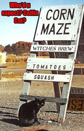 Halloween season is Basement Cat's time