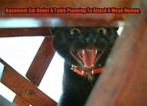 Basement Cat Under A Table Planning To Attack A Mean Human.
